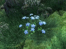 Синий лен