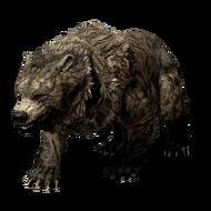 Пещерный медведь Cave Bear 003