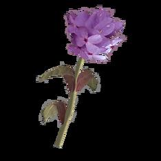 Лиловый горноцвет.png