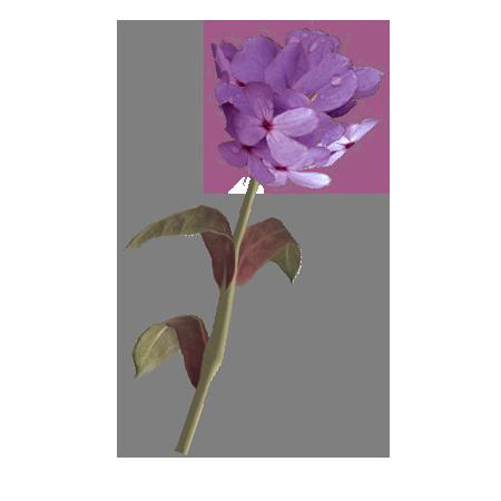Лиловый горноцвет (Skyrim)