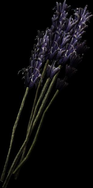 Lavender (Skyrim)