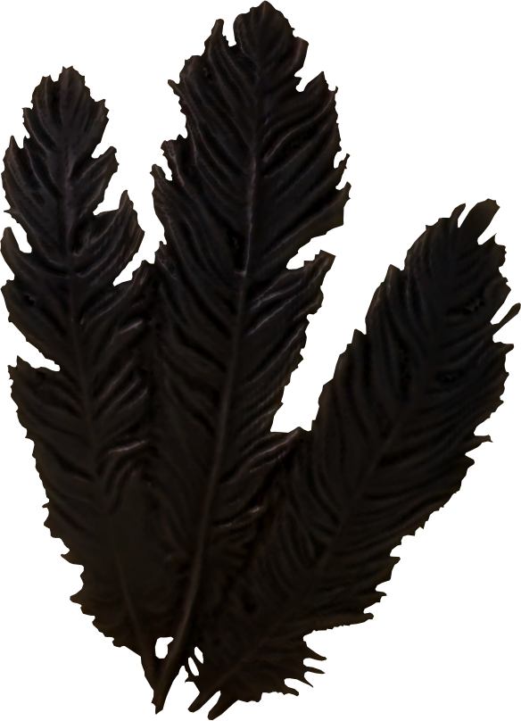 Hagraven Feathers