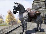 Imperial Horse