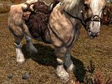 Cavalo (Skyrim)