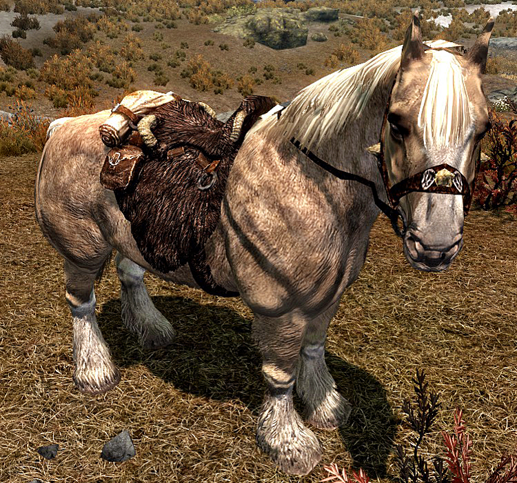 Frost (Horse)
