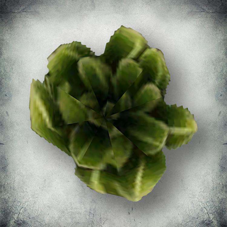 Скрибовая капуста