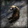 Медвежья проблема