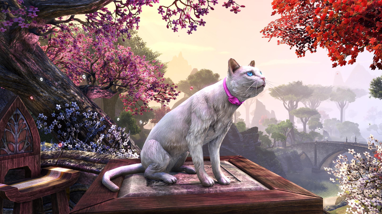 Milady's Cloud Cat