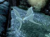Ćma księżycowa (Skyrim)