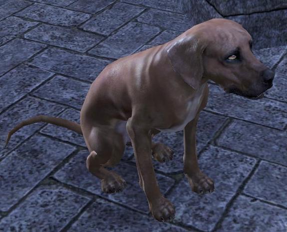 Lorkhan (Dog)