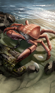 Foraging Mudcrab card art