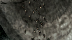 Ants Close-up.png