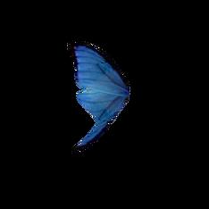 Крыло синей бабочки.png