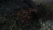 Creep Cluster (Skyrim)