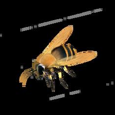 Пчела.png
