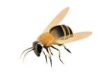 Пчела (Skyrim)