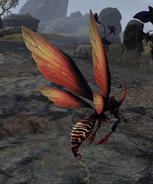 Fetcherfly back