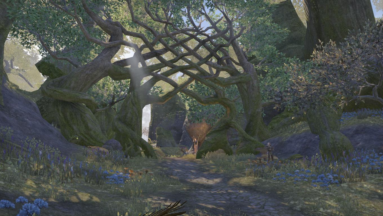 Глубокие леса