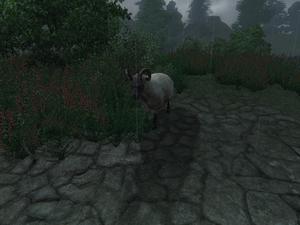 Овца (Oblivion) 3