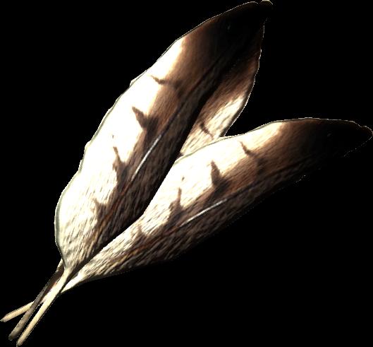 Hawk Feathers