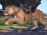 Senche-Lioness
