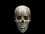 Skull of Llevule Andrano