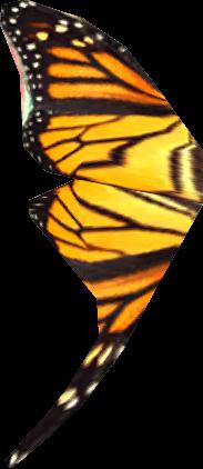 Ala di farfalla (Skyrim)