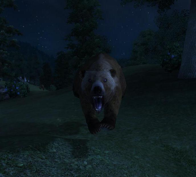 Сезон охоты на медведей