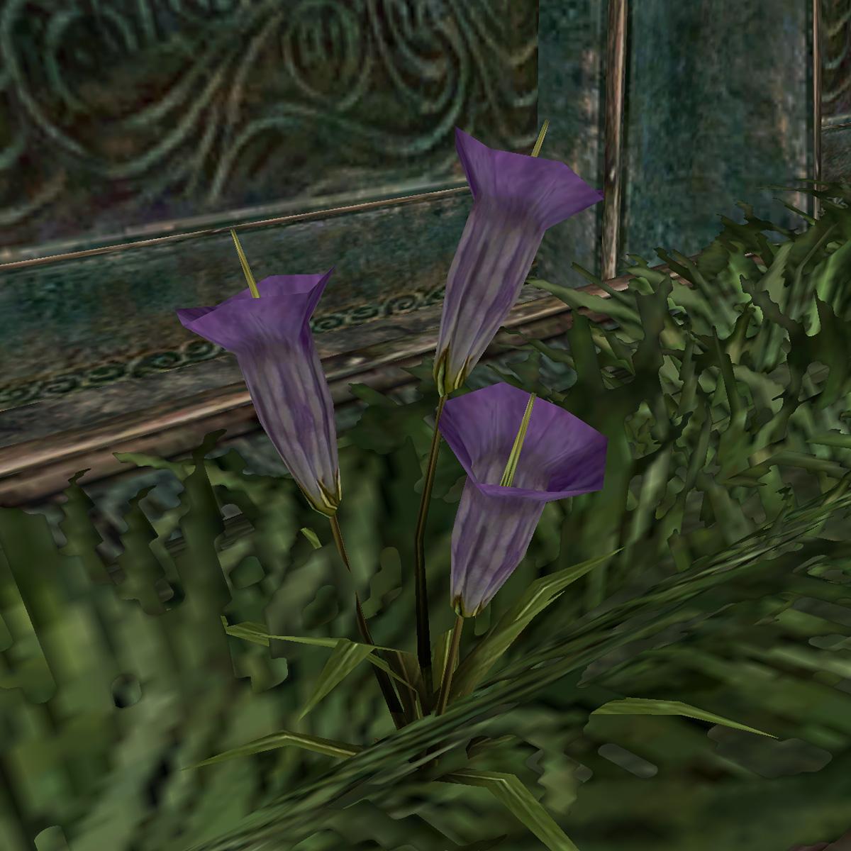 Луковица рогатой лилии