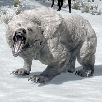 Orso delle nevi (Skyrim)