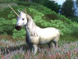 Unicorn (Oblivion)