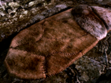 Sleeping (Skyrim)