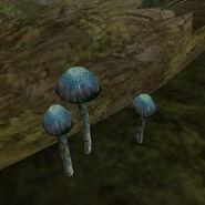 Лиловый копринус (гриб) 02