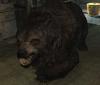 Bear (Blades).png