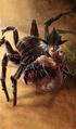 Spiderling card art