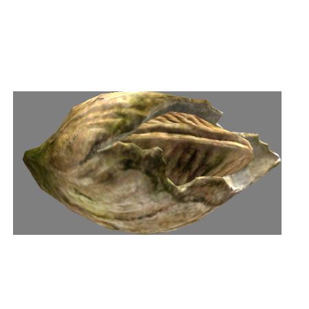 Морской жёлудь (Skyrim)