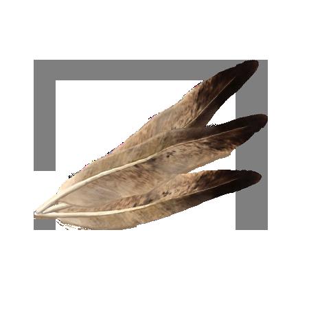 Перья ястреба (Skyrim)