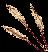 Росток лаванды