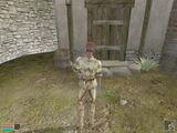 Bugs (Morrowind)