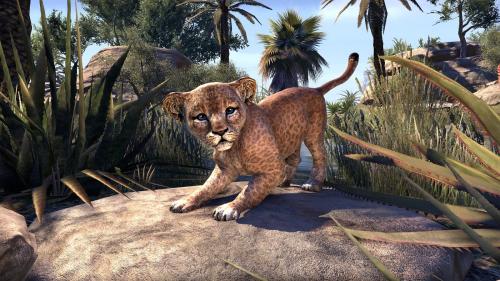 Senche-Lion Cub