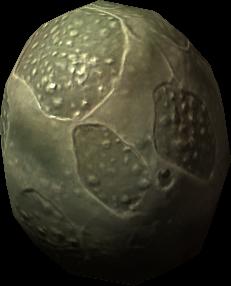 Uovo di pesce macellaio