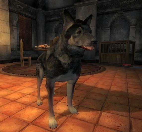 Rohssan's Dog
