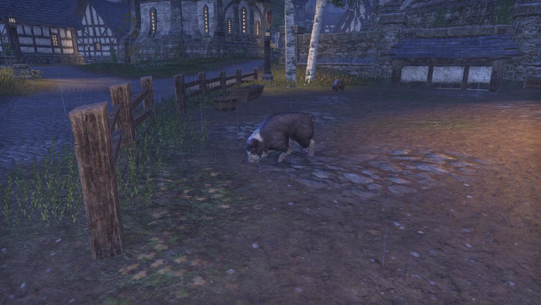 Вор свиней