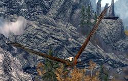 Falco.png