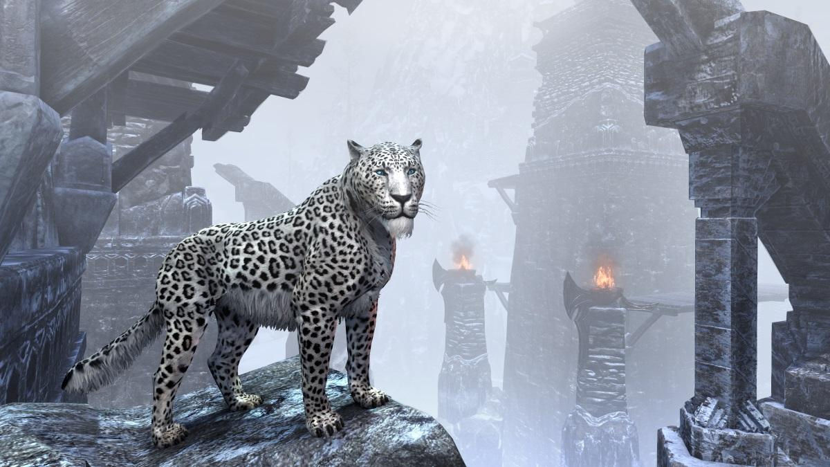 Spotted Snow Senche-Leopard