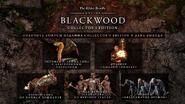 Blackwood Промо dgtl