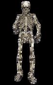 Skeleton MW