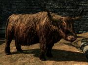 Plik:Krowa (Skyrim).png