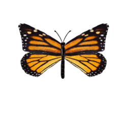 Монарх.png