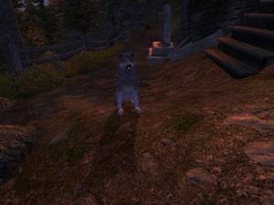 Лесной волк (Oblivion) 1
